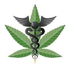 Occupy Wall Street marijuana